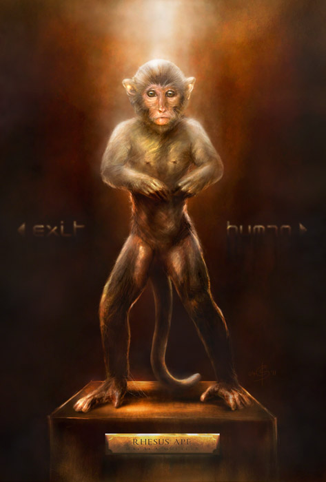 Digitale Illustration Rhesus
